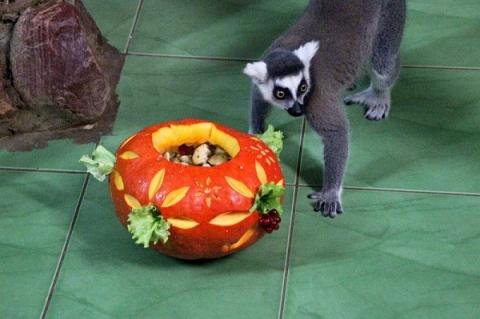 Зоопарк «Лимпопо» организует конкурс на самую большую тыкву.