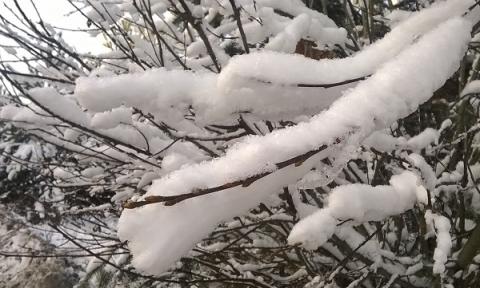 Потепление и снег придут в Нижний Новгород на этой неделе