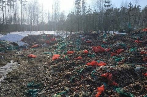 Огромная свалка лука обнаружена под Дзержинском