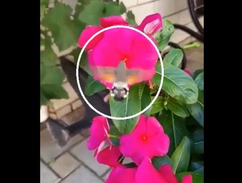 «Колибри» прилетела к садоводам на Бору