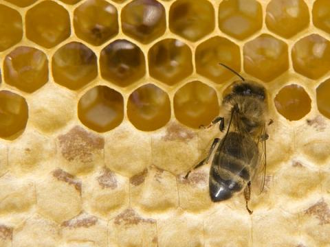 Два участка на Бору сдадут в аренду растениеводам и пчеловодам в 2021 году