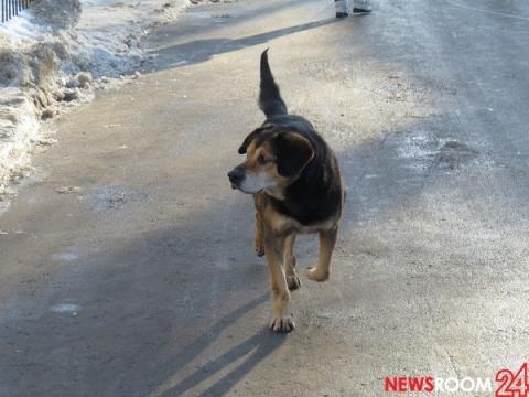 Агрессивная собака напала на жительницу Кстова с питомцем