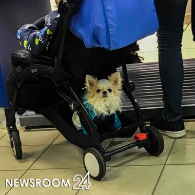 Ветеринар в Нижнем Новгороде привлечен к ответственности за некачественное лечение животного