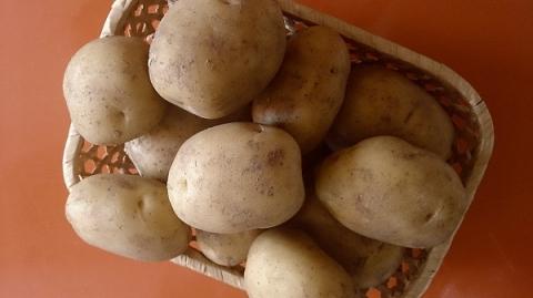 Производство картофеля выросло на 27% в Нижегородской области в 2020 году
