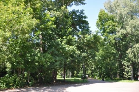 804 лиственных и 828 хвойных деревьев высадят в нижегородском парке «Швейцария»