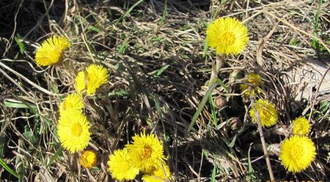 Весна придет в Нижегородскую область раньше в 2021 году