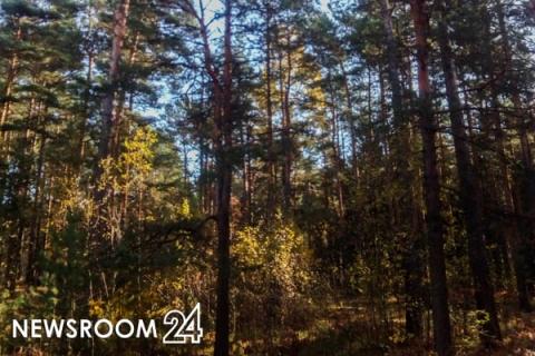 Еще одну базу отдыха построят за 65 млн рублей в Городецком районе