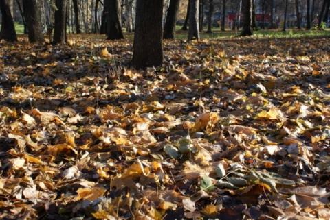Потепление до +14 градусов ожидается в Нижнем Новгороде на этой неделе