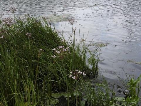 40 участков нижегородцев затоплены в СНТ Сормовского района
