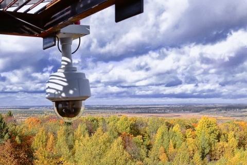 На мониторинг нижегородских лесов выделено около 15 млн рублей