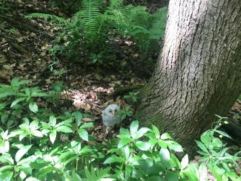 Рубку деревьев в Богородском районе перенесли на осень из-за совиного гнезда