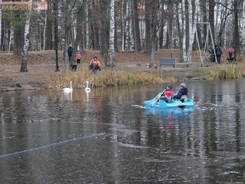 Обитателей «Лебединого рая» в Выксе перевели на зимовку в теплый ангар
