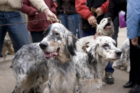 Запрет на выгул собак и велосипеды введен в нижегородском парке «Швейцария»