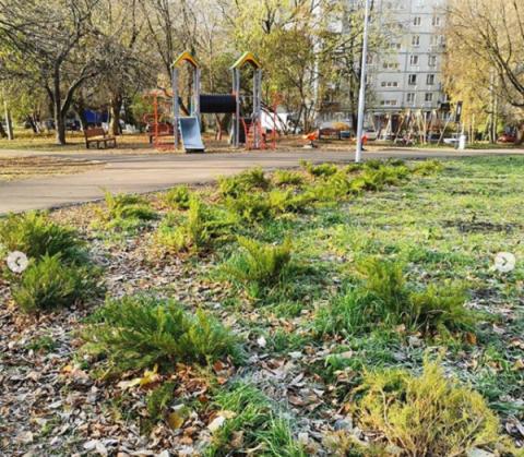 Нижегородцы выкопали кусты на благоустроенной «Красной горке»