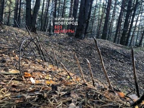 Жуткая ловушка обнаружена в лесу Нижегородской области