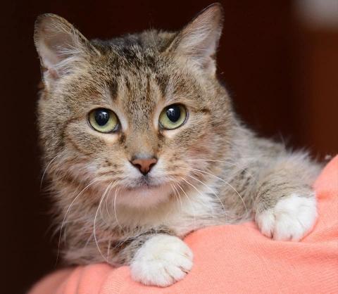 В Нижнем Новгороде умирающая женщина раздает 60 кошек