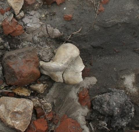 Кости обнаружены в строительном мусоре под стенами нижегородского кремля