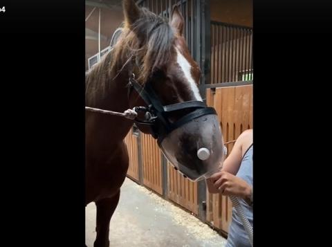 Лошадиный ингалятор появился в приюте Нижегородской области