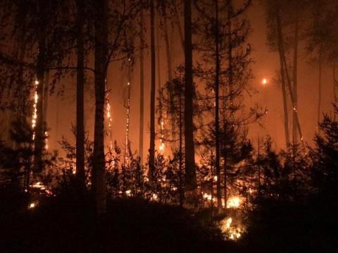 Режим ЧС возобновлен в Сарове из-за лесных пожаров