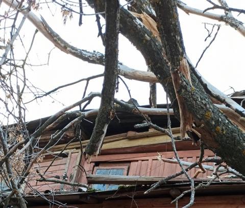 Дерево проломило крышу аварийного дома в центре Нижнего Новгорода