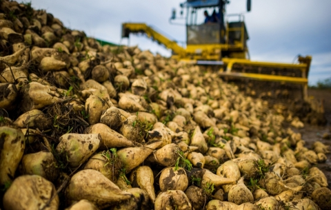 Сергачский сахарный завод инвестировал 150 млн рублей в безотходное производство