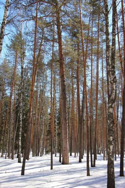 Нелегальная вырубка деревьев выросла в 3,6 раза в Нижегородской области