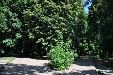 50 тысяч кустарников высадят в Нижнем Новгороде к 800-летию