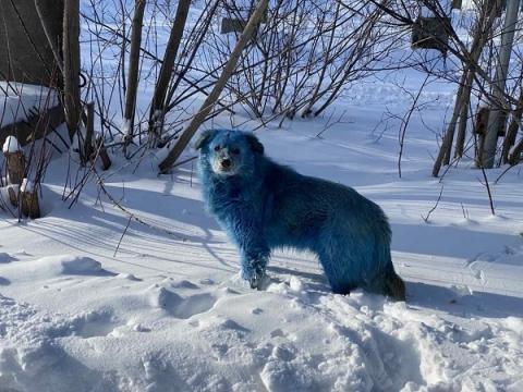 Стаю синих собак заметили жители у завода «Оргстекло» в Дзержинске