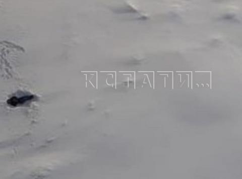 Появились подробности падения мужчины с Мызинского моста в Нижнем Новгороде