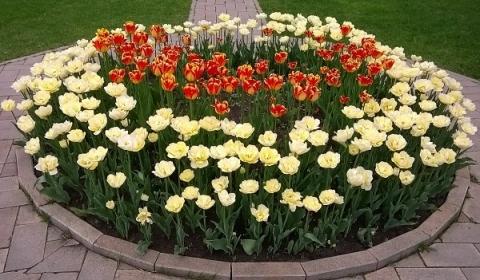 Тысячу цветущих спирей посадят в сквере на Ярмарочном проезде