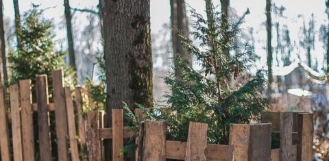 В нижегородской «Швейцарии» удалили семь деревьев из-за нарушений при посадке