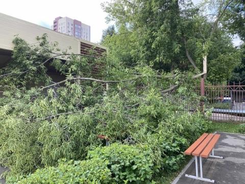 Шквалистый ветер повалил 37 деревьев в Нижнем Новгороде