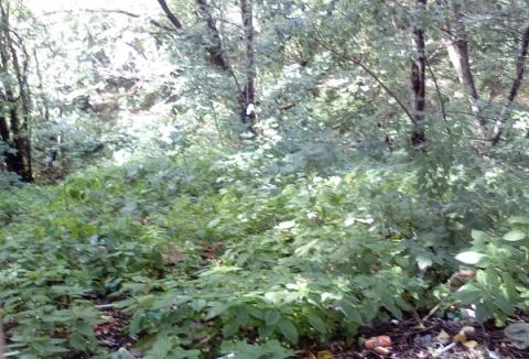 Тело убитой американской студентки обнаружили в лесу в Городецком районе