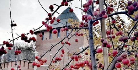 Заморозки и ветер ожидаются в Нижнем Новгороде с 19 по 25 октября