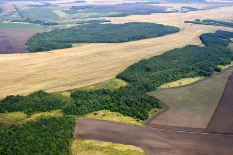531 тыс. га сельхозземель не используются в Нижегородской области